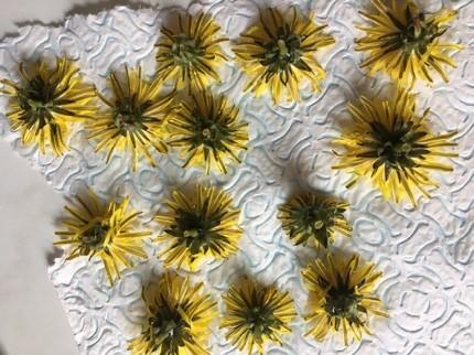 Dried dandelion heads