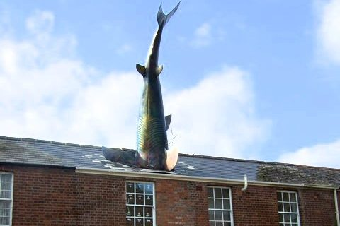 Photograph of a 25ft fibreglass shark's body sticking out of a terrace house in Headington